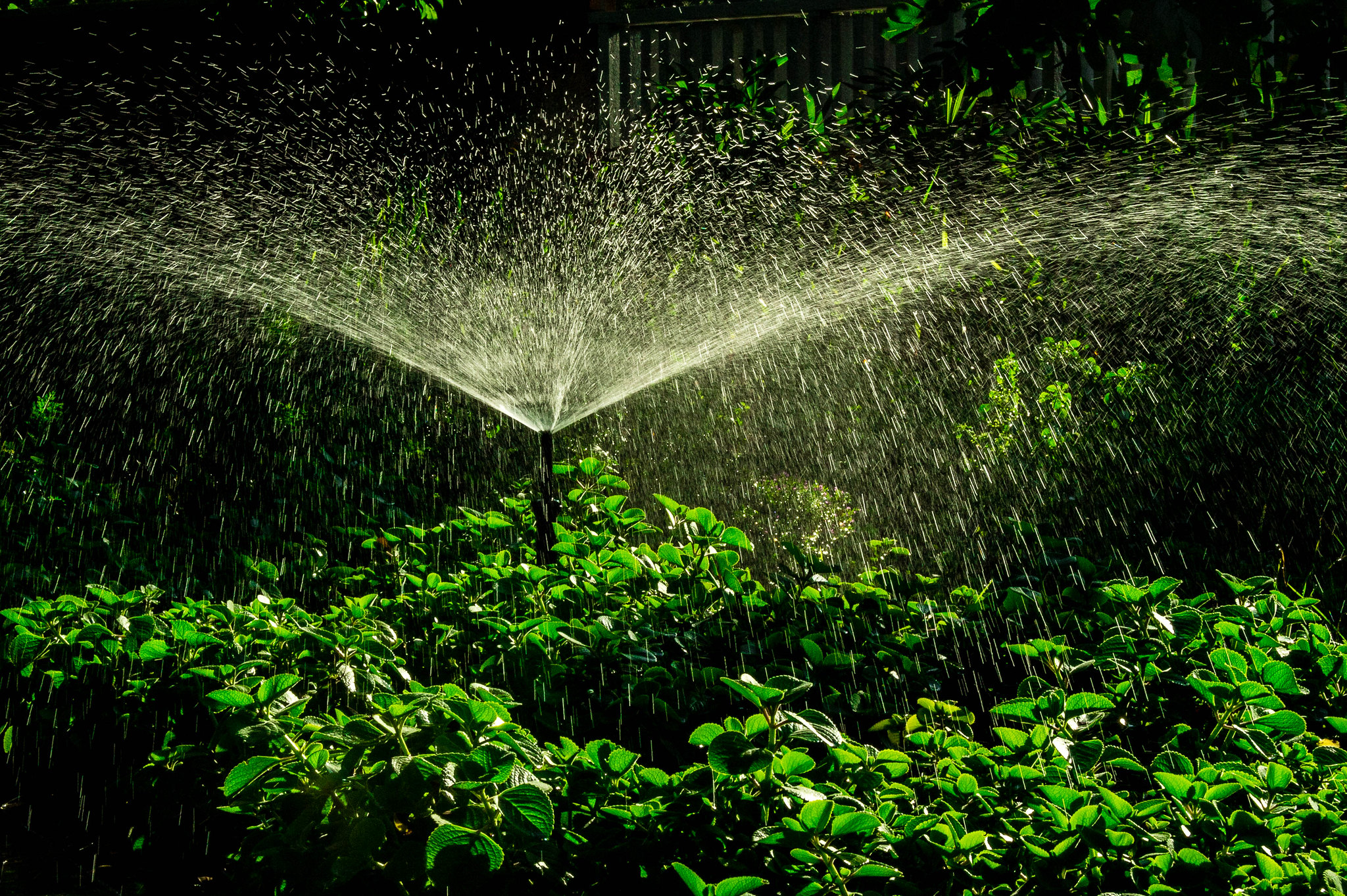 Water sprinkler and green plants